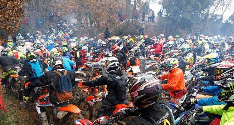 Basella race